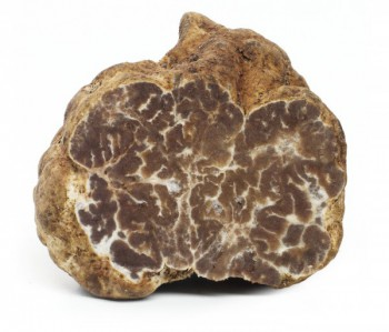 Bianchetti truffel